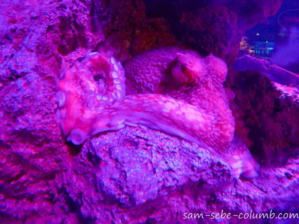 осьминог в бангкоке
