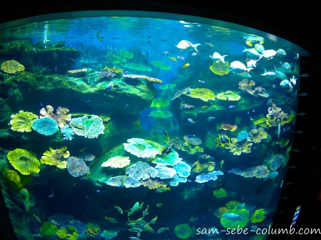 подводный мир окенариума