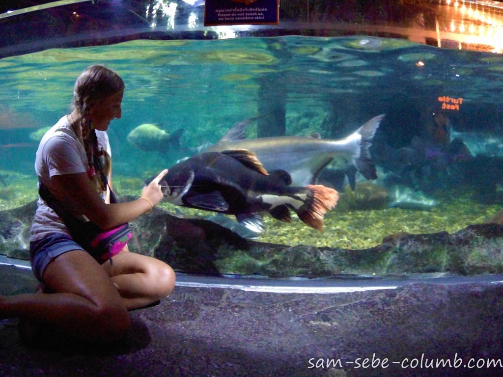 стоит ли посещать океанариум в бангкоке