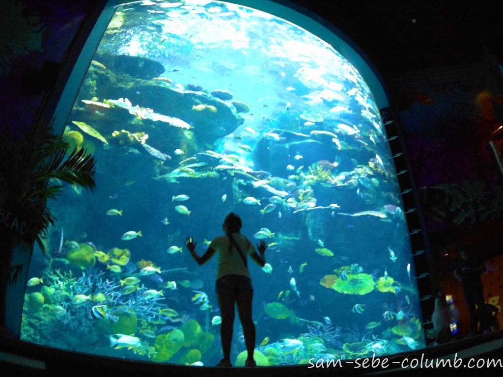самый большой океанариум в ЮВА