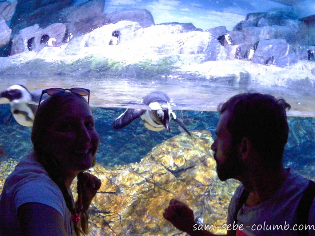 какие животные есть в океанариуме в бангкоке