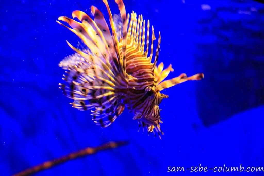 веселые рыбки в океанариуме
