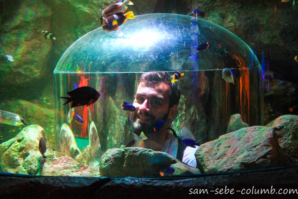 развлечения в океанариуме в бангкоке