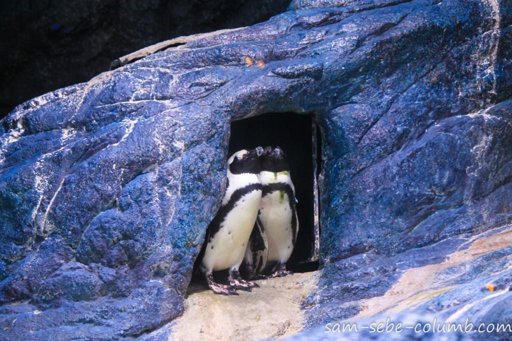 пингвины в бангкоке
