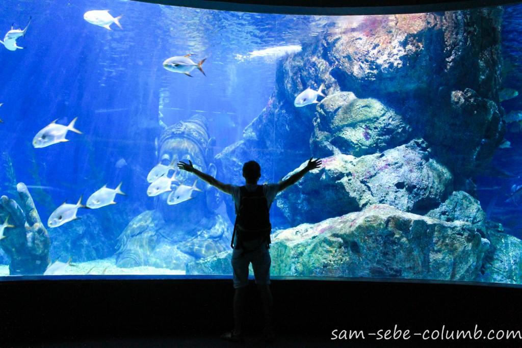 Подводный мир Sea Life
