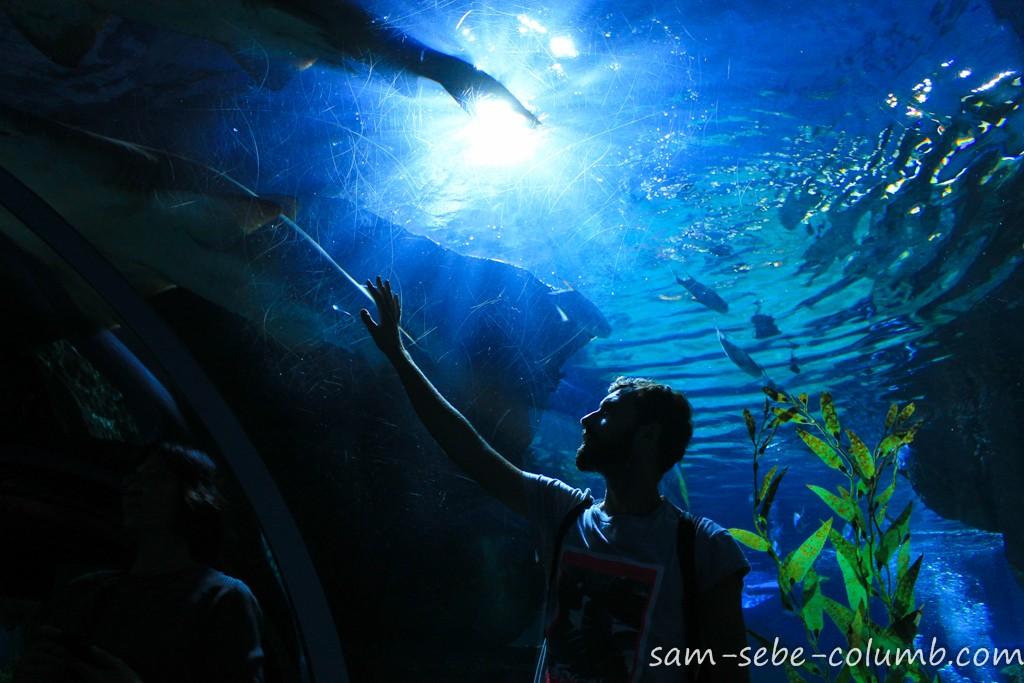 подводный туннель в океанариуме