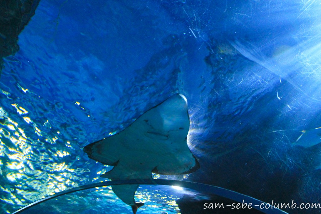 большой подводный туннель в аквариуме