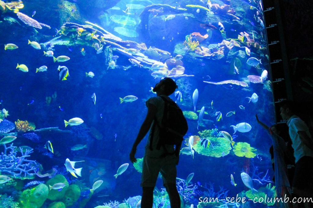 огромный аквариум в Sea Life Bangkok