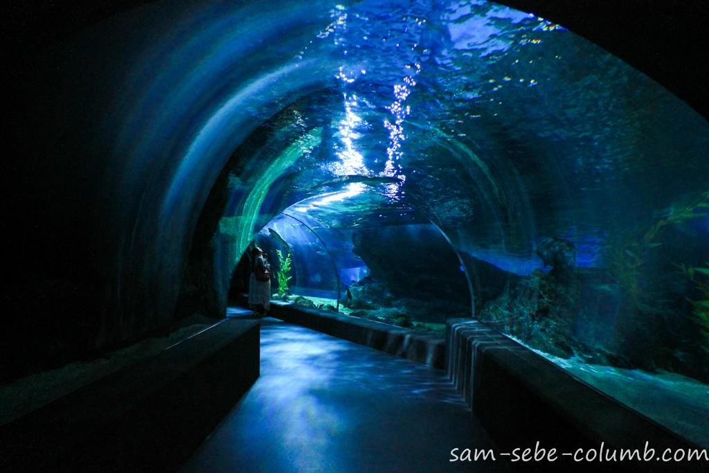 подводный туннель в океанариуме Бангкока